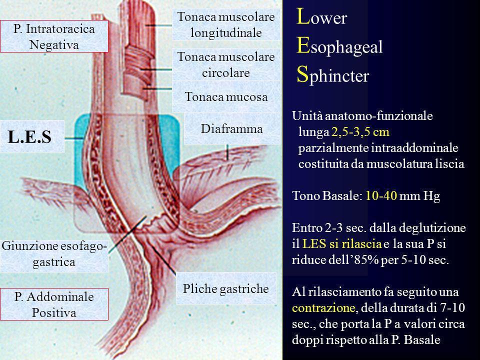 Tonaca muscolare longitudinale Pliche gastriche Diaframma Tonaca muscolare circolare P. Intratoracica Negativa P. Addominale Positiva Giunzione esofag