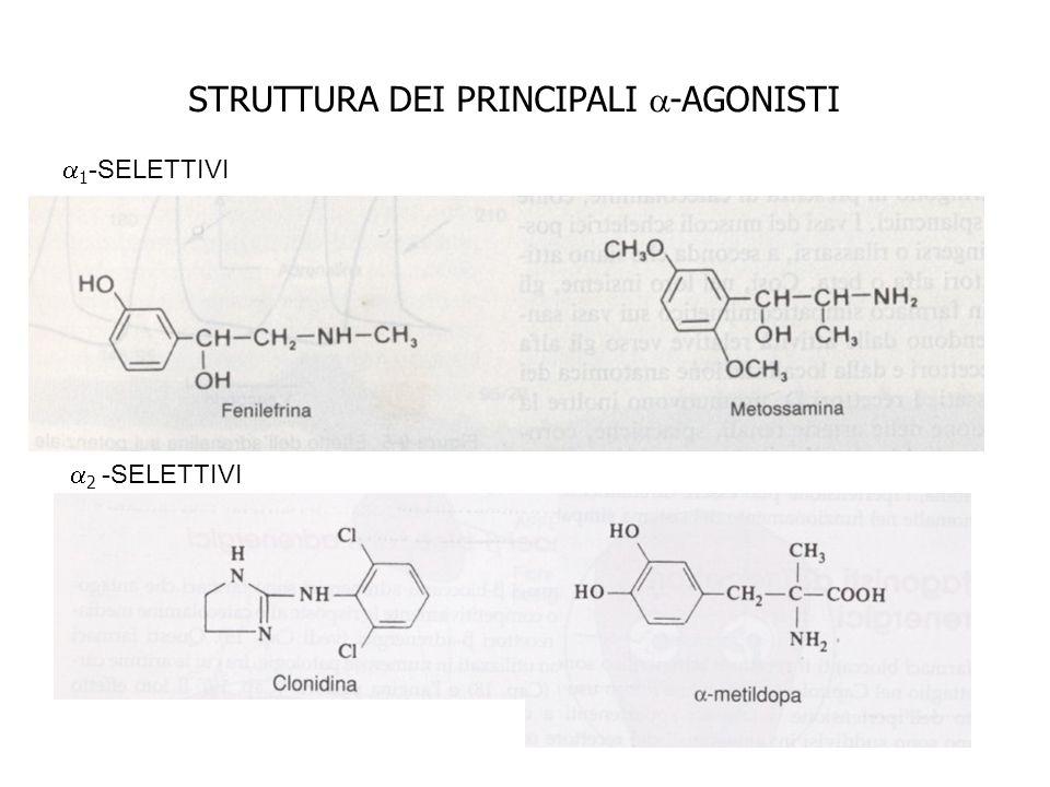 STRUTTURA DEI PRINCIPALI -AGONISTI 1 -SELETTIVI 2 -SELETTIVI