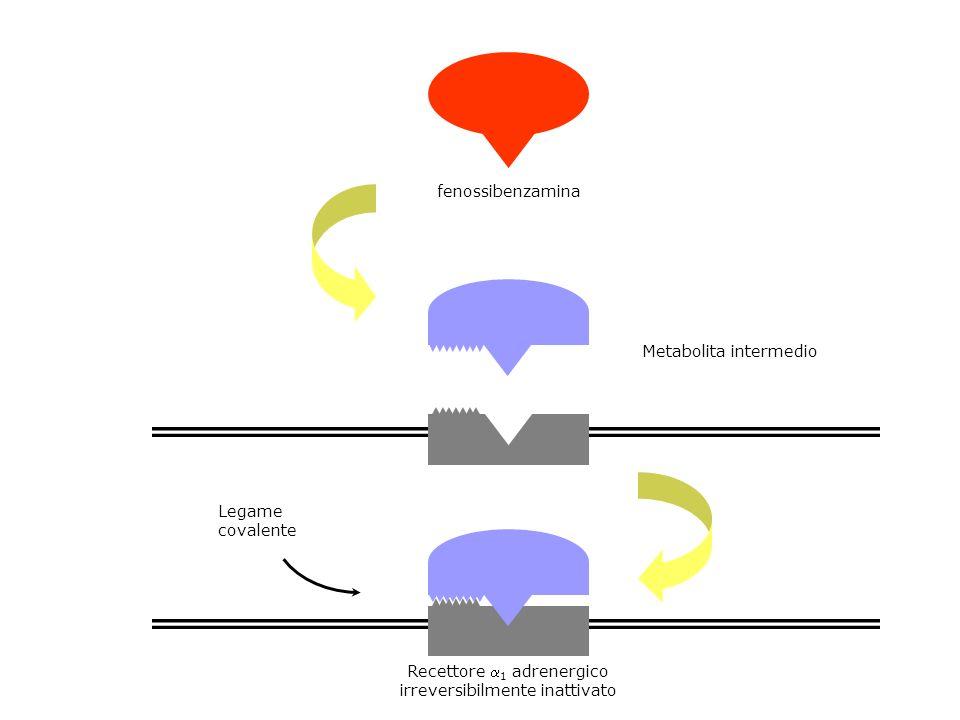 fenossibenzamina Metabolita intermedio Legame covalente Recettore 1 adrenergico irreversibilmente inattivato