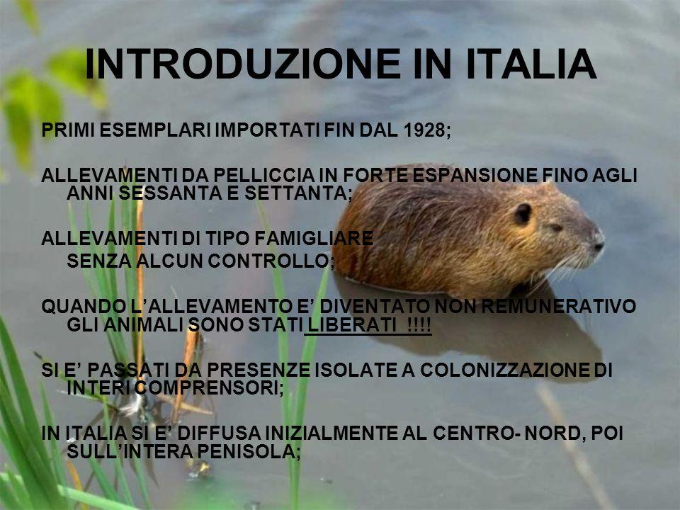 INTRODUZIONE IN ITALIA PRIMI ESEMPLARI IMPORTATI FIN DAL 1928; ALLEVAMENTI DA PELLICCIA IN FORTE ESPANSIONE FINO AGLI ANNI SESSANTA E SETTANTA; ALLEVA