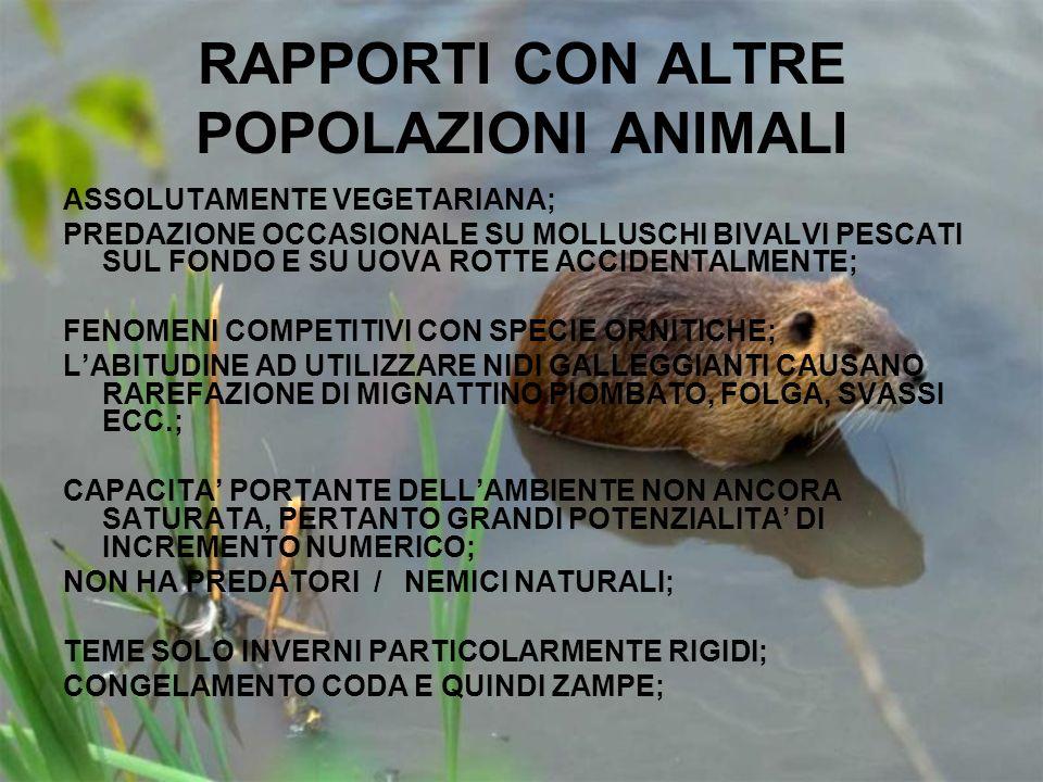 RAPPORTI CON ALTRE POPOLAZIONI ANIMALI ASSOLUTAMENTE VEGETARIANA; PREDAZIONE OCCASIONALE SU MOLLUSCHI BIVALVI PESCATI SUL FONDO E SU UOVA ROTTE ACCIDE
