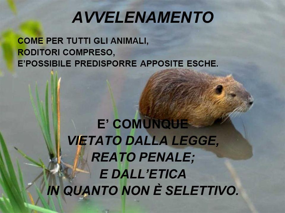AVVELENAMENTO COME PER TUTTI GLI ANIMALI, RODITORI COMPRESO, EPOSSIBILE PREDISPORRE APPOSITE ESCHE. E COMUNQUE VIETATO DALLA LEGGE, REATO PENALE; E DA