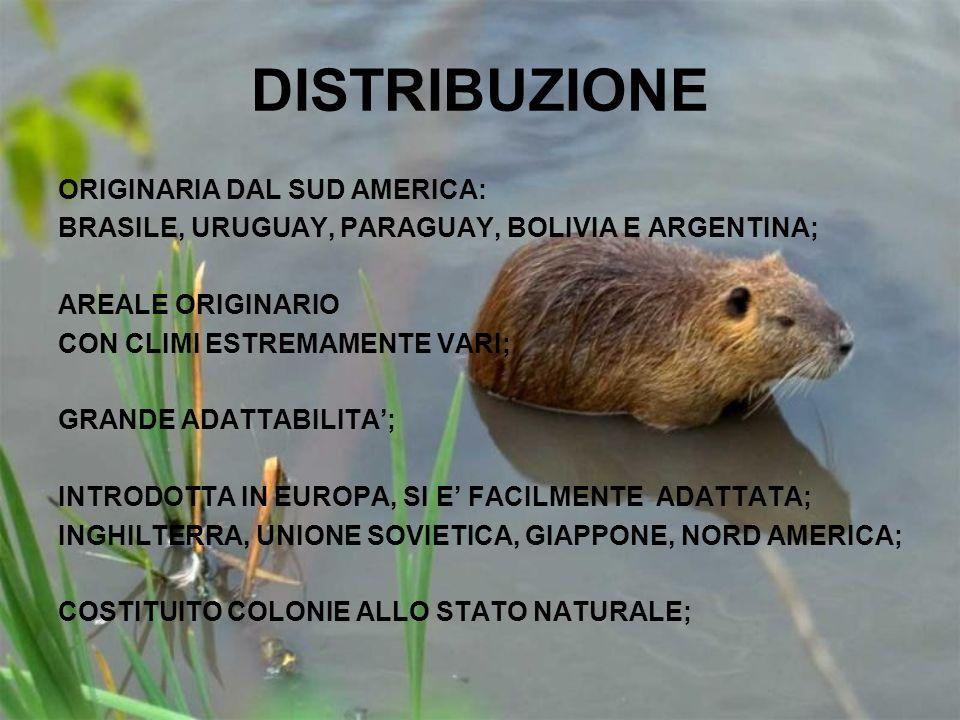 DISTRIBUZIONE ORIGINARIA DAL SUD AMERICA: BRASILE, URUGUAY, PARAGUAY, BOLIVIA E ARGENTINA; AREALE ORIGINARIO CON CLIMI ESTREMAMENTE VARI; GRANDE ADATT
