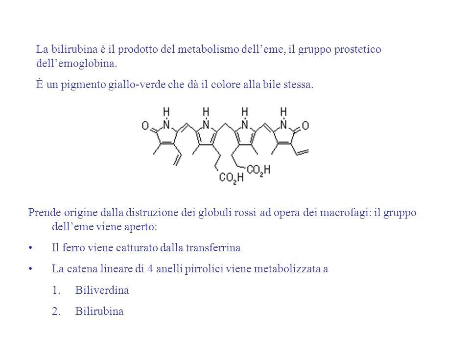 La bilirubina è il prodotto del metabolismo delleme, il gruppo prostetico dellemoglobina. È un pigmento giallo-verde che dà il colore alla bile stessa