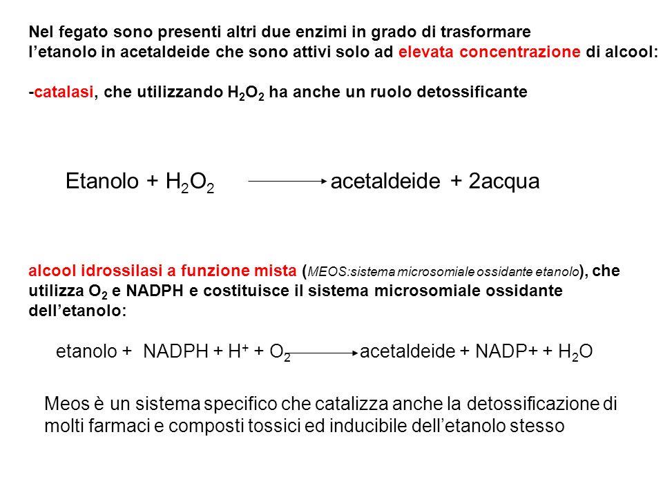 Nel fegato sono presenti altri due enzimi in grado di trasformare letanolo in acetaldeide che sono attivi solo ad elevata concentrazione di alcool: -c