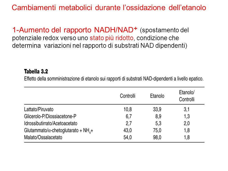1-Aumento del rapporto NADH/NAD + (spostamento del potenziale redox verso uno stato più ridotto, condizione che determina variazioni nel rapporto di s