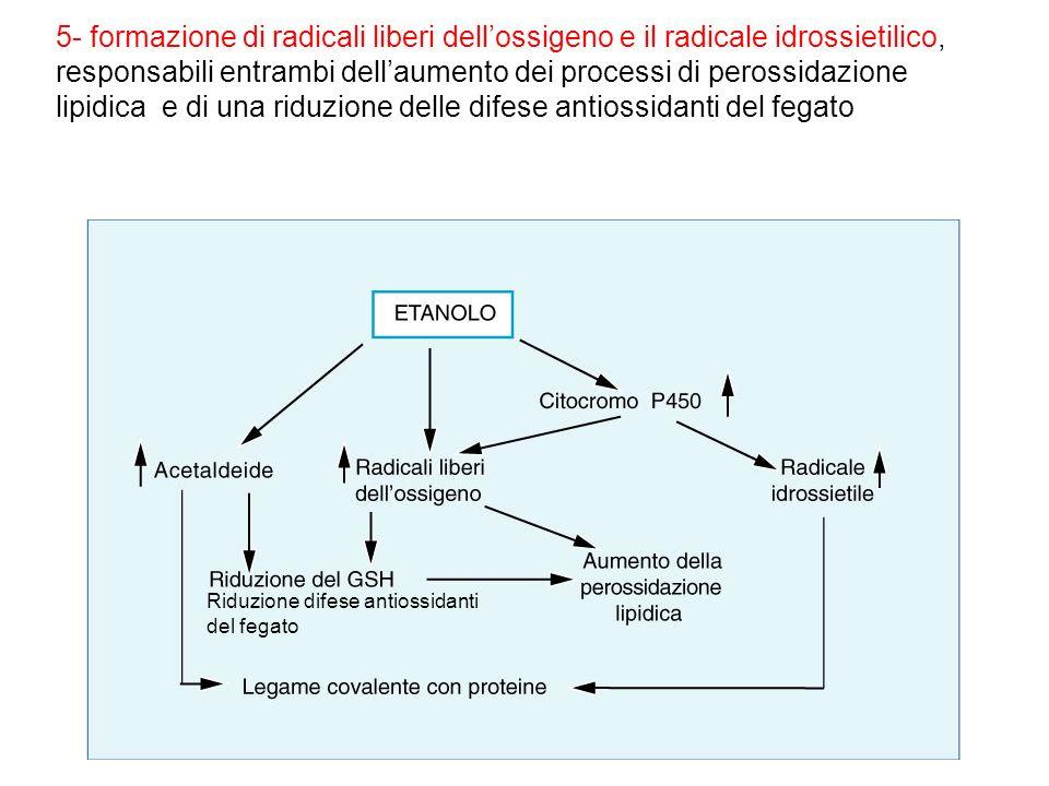 5- formazione di radicali liberi dellossigeno e il radicale idrossietilico, responsabili entrambi dellaumento dei processi di perossidazione lipidica