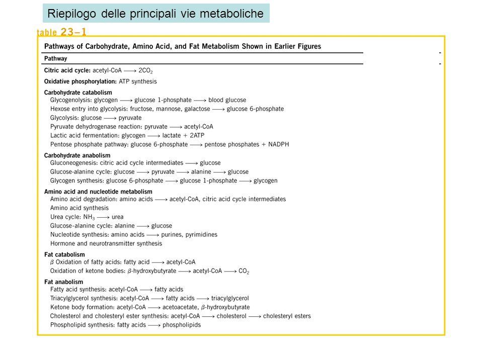 Riepilogo delle principali vie metaboliche
