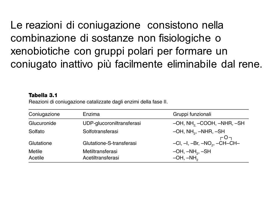 Le reazioni di coniugazione consistono nella combinazione di sostanze non fisiologiche o xenobiotiche con gruppi polari per formare un coniugato inatt