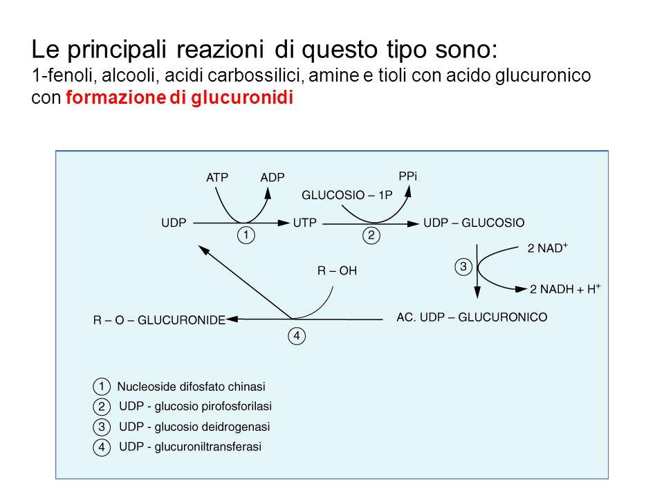 Le principali reazioni di questo tipo sono: 1-fenoli, alcooli, acidi carbossilici, amine e tioli con acido glucuronico con formazione di glucuronidi