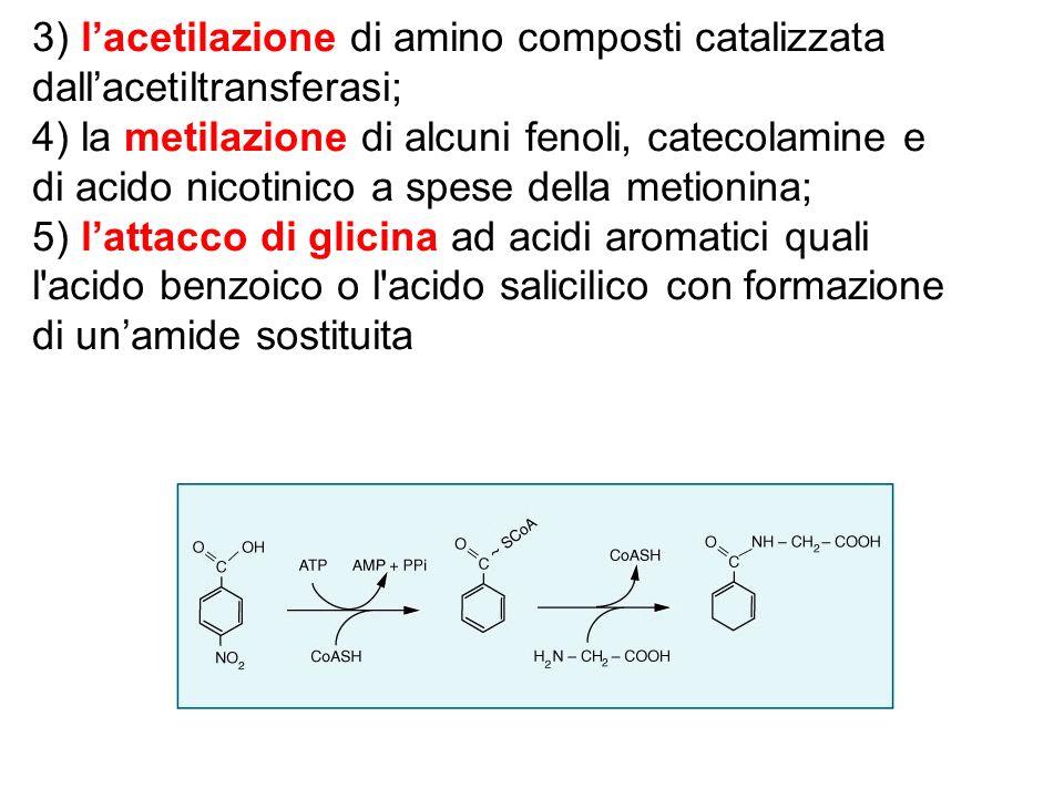 3) lacetilazione di amino composti catalizzata dallacetiltransferasi; 4) la metilazione di alcuni fenoli, catecolamine e di acido nicotinico a spese d