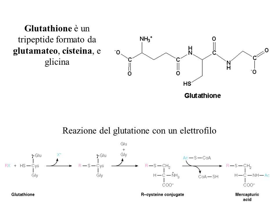 Glutathione è un tripeptide formato da glutamateo, cisteina, e glicina Reazione del glutatione con un elettrofilo