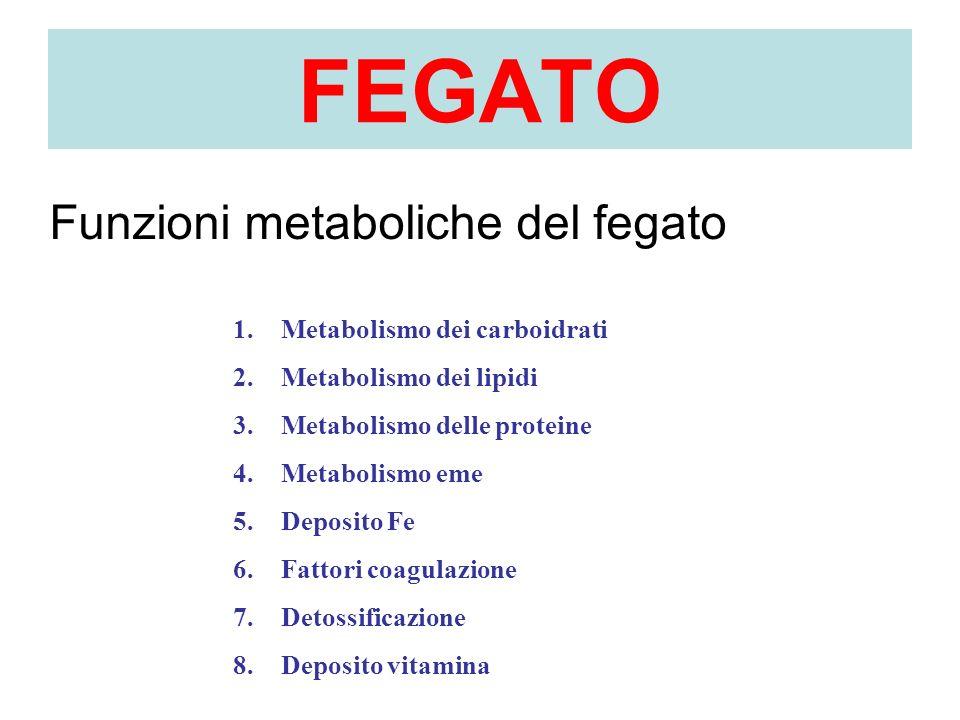 FEGATO 1.Metabolismo dei carboidrati 2.Metabolismo dei lipidi 3.Metabolismo delle proteine 4.Metabolismo eme 5.Deposito Fe 6.Fattori coagulazione 7.De
