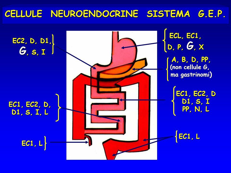CELLULE NEUROENDOCRINE SISTEMA G.E.P. ECL, EC1, D, P, G, X EC2, D, D1, G, S, I EC1, EC2, D D1, S, I PP, N, L EC1, EC2, D, D1, S, I, L EC1, L A, B, D,