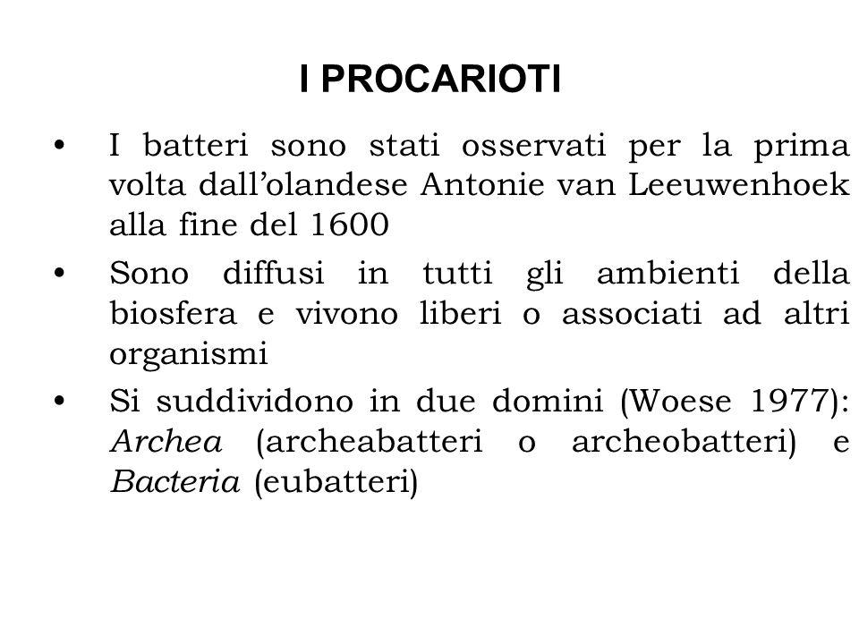 I PROCARIOTI I batteri sono stati osservati per la prima volta dallolandese Antonie van Leeuwenhoek alla fine del 1600 Sono diffusi in tutti gli ambienti della biosfera e vivono liberi o associati ad altri organismi Si suddividono in due domini (Woese 1977): Archea (archeabatteri o archeobatteri) e Bacteria (eubatteri)