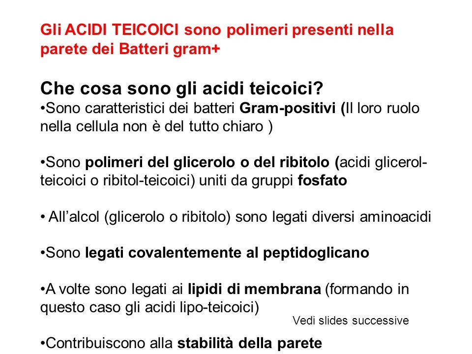 Gli ACIDI TEICOICI sono polimeri presenti nella parete dei Batteri gram+ Che cosa sono gli acidi teicoici.