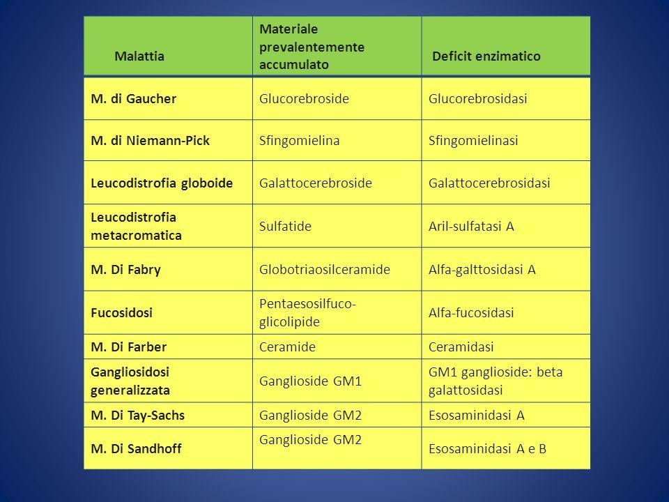 Malattia Materiale prevalentemente accumulato Deficit enzimatico M. di GaucherGlucorebrosideGlucorebrosidasi M. di Niemann-PickSfingomielinaSfingomiel