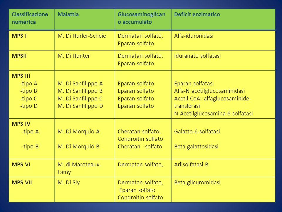 Classificazione numerica MalattiaGlucosaminoglican o accumulato Deficit enzimatico MPS IM. Di Hurler-ScheieDermatan solfato, Eparan solfato Alfa-iduro