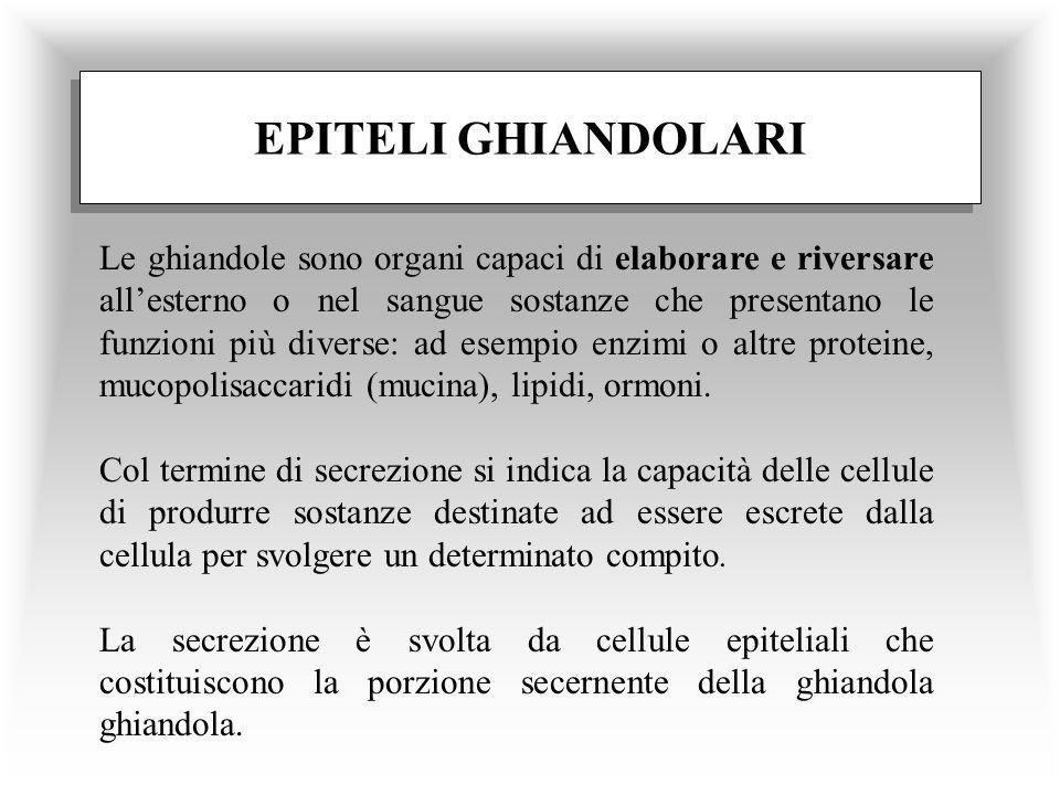 EPITELI GHIANDOLARI Le ghiandole sono organi capaci di elaborare e riversare allesterno o nel sangue sostanze che presentano le funzioni più diverse: