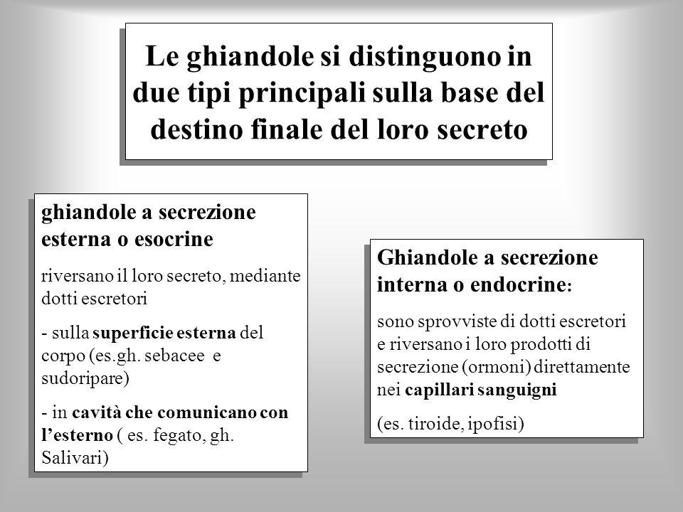 Le ghiandole si distinguono in due tipi principali sulla base del destino finale del loro secreto ghiandole a secrezione esterna o esocrine riversano