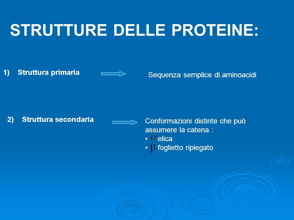 STRUTTURE DELLE PROTEINE: 1)Struttura primaria 2)Struttura secondaria Sequenza semplice di aminoacidi Conformazioni distinte che può assumere la caten