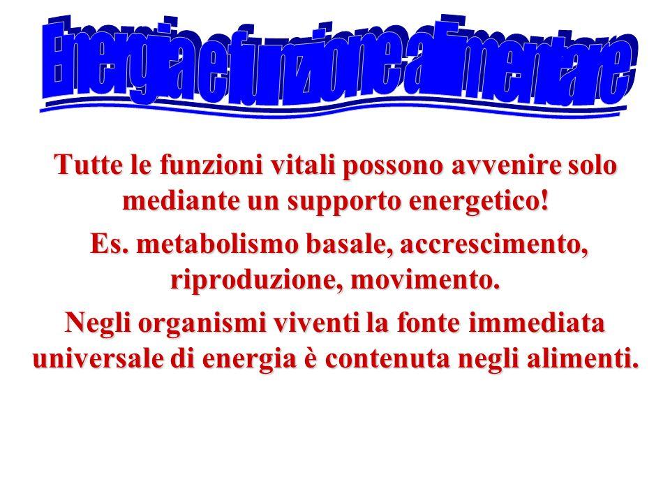 Tutte le funzioni vitali possono avvenire solo mediante un supporto energetico! Es. metabolismo basale, accrescimento, riproduzione, movimento. Es. me