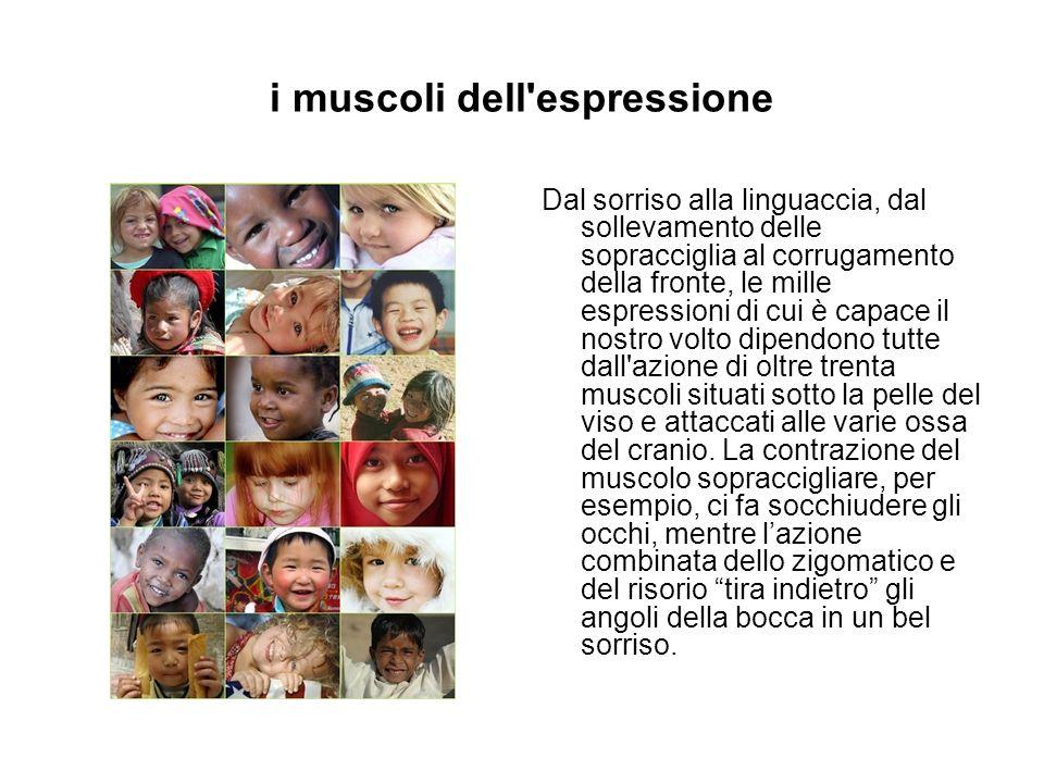 i muscoli dell'espressione Dal sorriso alla linguaccia, dal sollevamento delle sopracciglia al corrugamento della fronte, le mille espressioni di cui