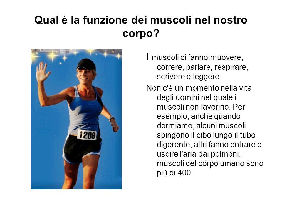 Qual è la funzione dei muscoli nel nostro corpo? I muscoli ci fanno:muovere, correre, parlare, respirare, scrivere e leggere. Non c'è un momento nella