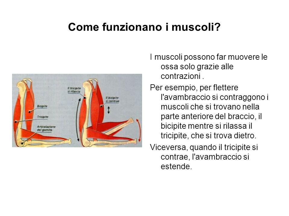 Come funzionano i muscoli? I muscoli possono far muovere le ossa solo grazie alle contrazioni. Per esempio, per flettere l'avambraccio si contraggono