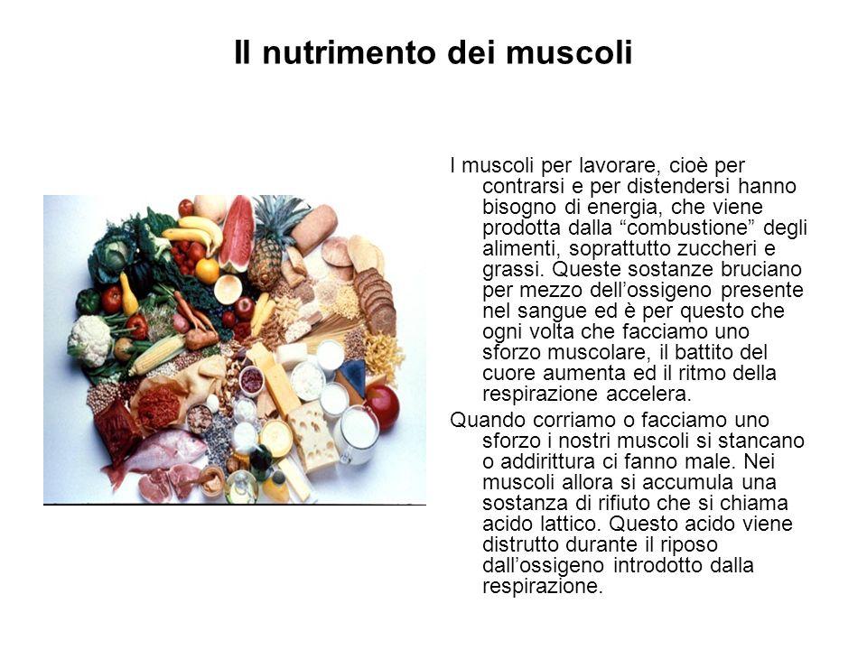 Il nutrimento dei muscoli I muscoli per lavorare, cioè per contrarsi e per distendersi hanno bisogno di energia, che viene prodotta dalla combustione