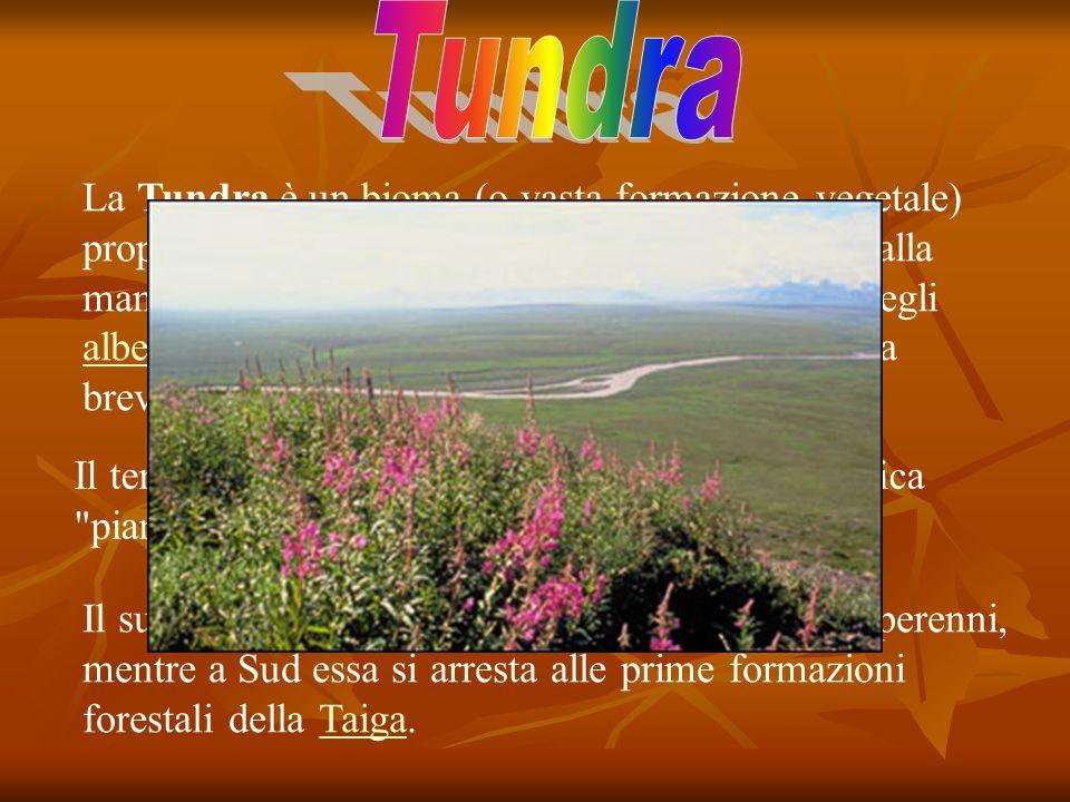 La Tundra è un bioma (o vasta formazione vegetale) propria delle regioni subpolari e caratterizzata dalla mancanza di specie arboree, poiché la cresci