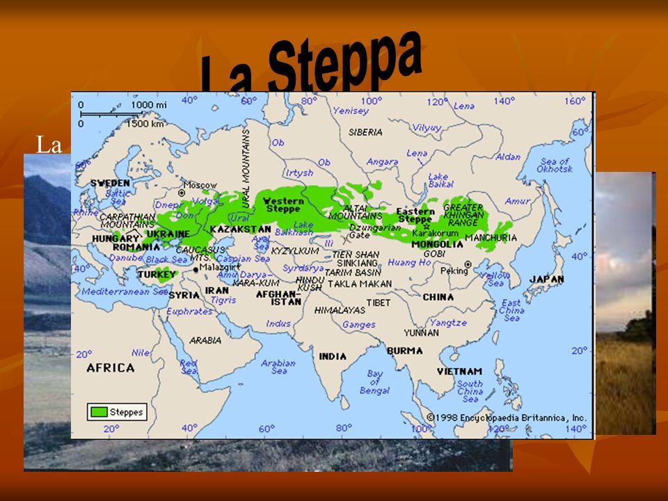 La steppa è un bioma caratterizzato da vegetazione erbacea. Questo ambiente si forma generalmente nelle regioni tropicali, subtropicali (steppa calda)