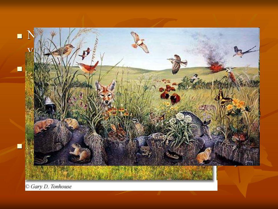 Nelle grandi praterie la fauna è estremamente variegata : Nelle grandi praterie la fauna è estremamente variegata : predominano i grandi erbivori (bis