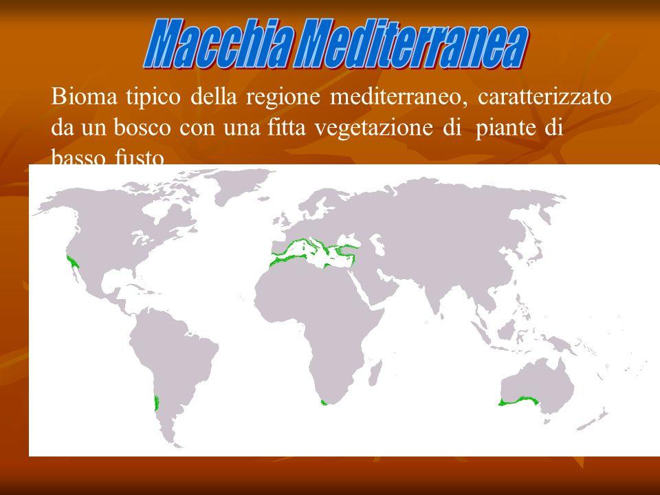 Bioma tipico della regione mediterraneo, caratterizzato da un bosco con una fitta vegetazione di piante di basso fusto La Macchia Mediterranea, si tro