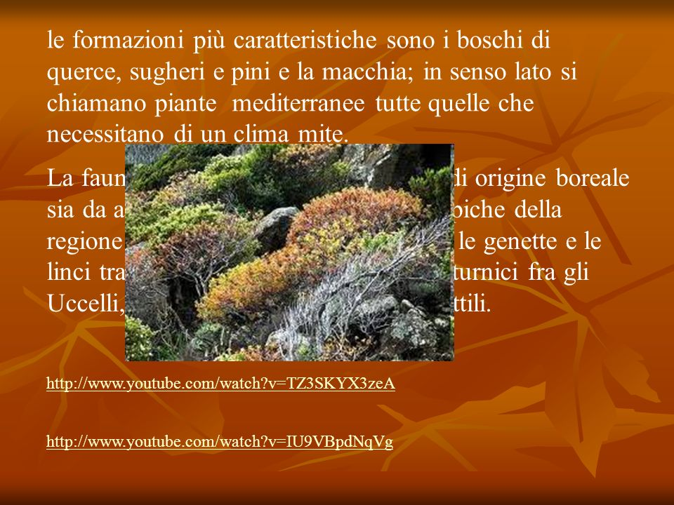 le formazioni più caratteristiche sono i boschi di querce, sugheri e pini e la macchia; in senso lato si chiamano piante mediterranee tutte quelle che