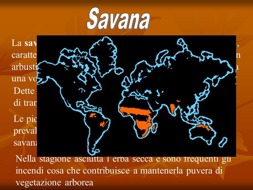 La savana è un bioma soprattutto tropicale e subtropicale, caratterizzato da una vegetazione a prevalenza erbosa, con arbusti ed alberi abbastanza dis
