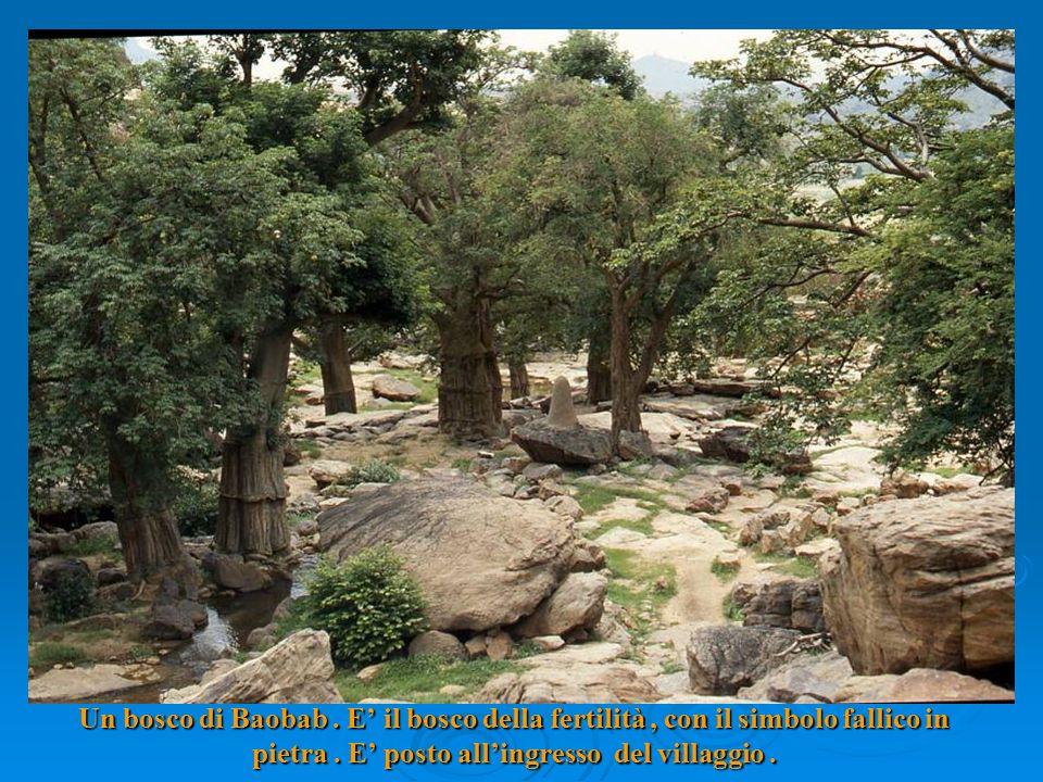 Un bosco di Baobab. E il bosco della fertilità, con il simbolo fallico in pietra.