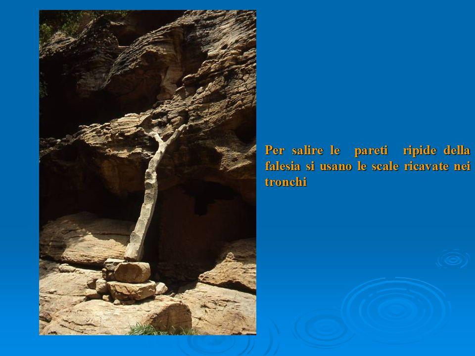 Per salire le pareti ripide della falesia si usano le scale ricavate nei tronchi