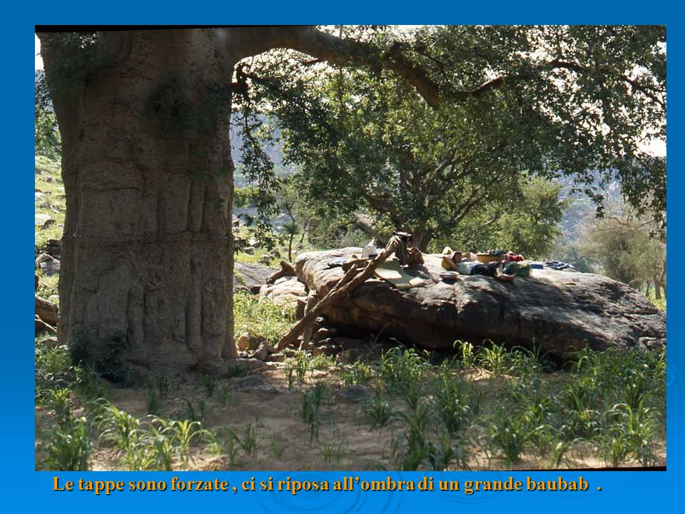 Le tappe sono forzate, ci si riposa allombra di un grande baubab.