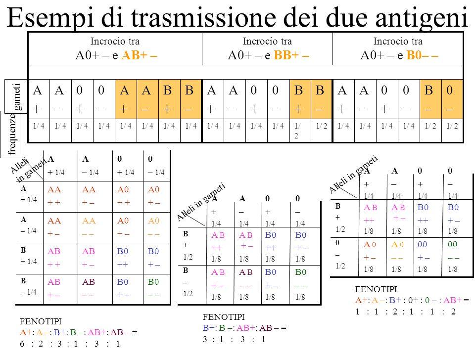 Esempi di trasmissione dei due antigeni gameti 1/ 2 1/ 4 1/ 2 1/ 4 Incrocio tra A0+ – e B0– – 0–0– B–B– 0–0– 0+0+ A–A– A+A+ B–B– B+B+ 0–0– 0+0+ A–A– A