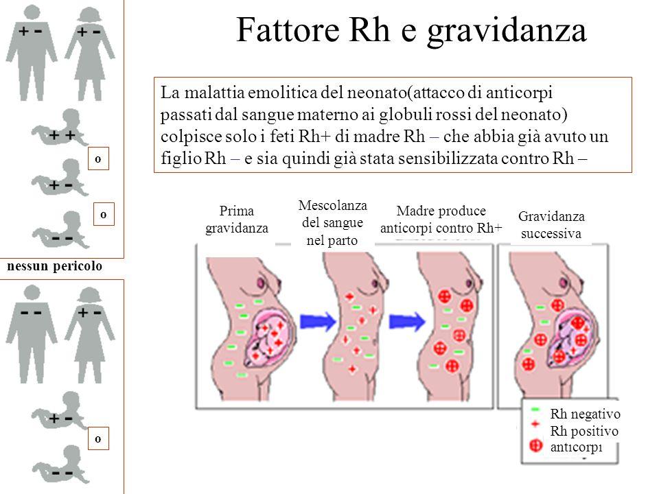 Prima gravidanza Mescolanza del sangue nel parto Madre produce anticorpi contro Rh+ Gravidanza successiva anticorpi Rh negativo Rh positivo Fattore Rh