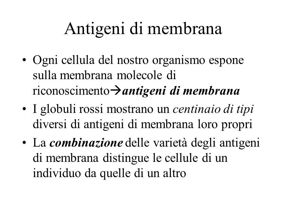 Antigeni di membrana Ogni cellula del nostro organismo espone sulla membrana molecole di riconoscimento antigeni di membrana I globuli rossi mostrano