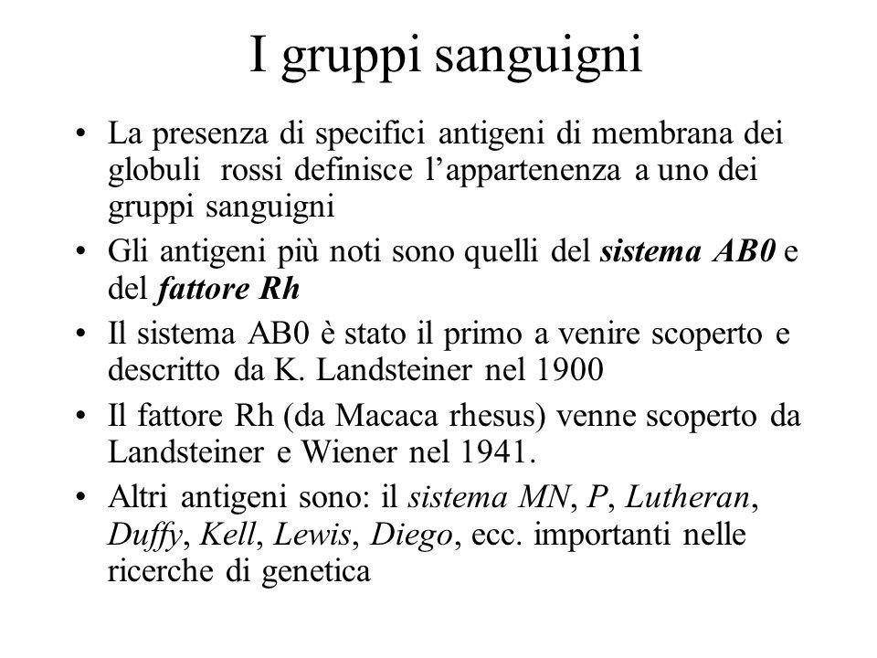 I gruppi sanguigni La presenza di specifici antigeni di membrana dei globuli rossi definisce lappartenenza a uno dei gruppi sanguigni Gli antigeni più