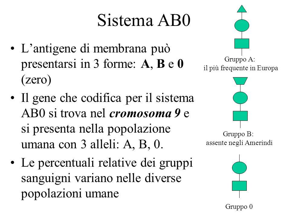 Sistema AB0 Lantigene di membrana può presentarsi in 3 forme: A, B e 0 (zero) Il gene che codifica per il sistema AB0 si trova nel cromosoma 9 e si pr