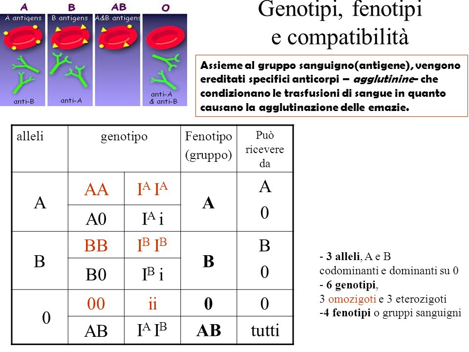 Genotipi, fenotipi e compatibilità alleligenotipoFenotipo (gruppo) Può ricevere da A AAI A A A0A0 A0I A i B BBI B B B0B0 B0I B i 0 00 ii00 AB I A I B
