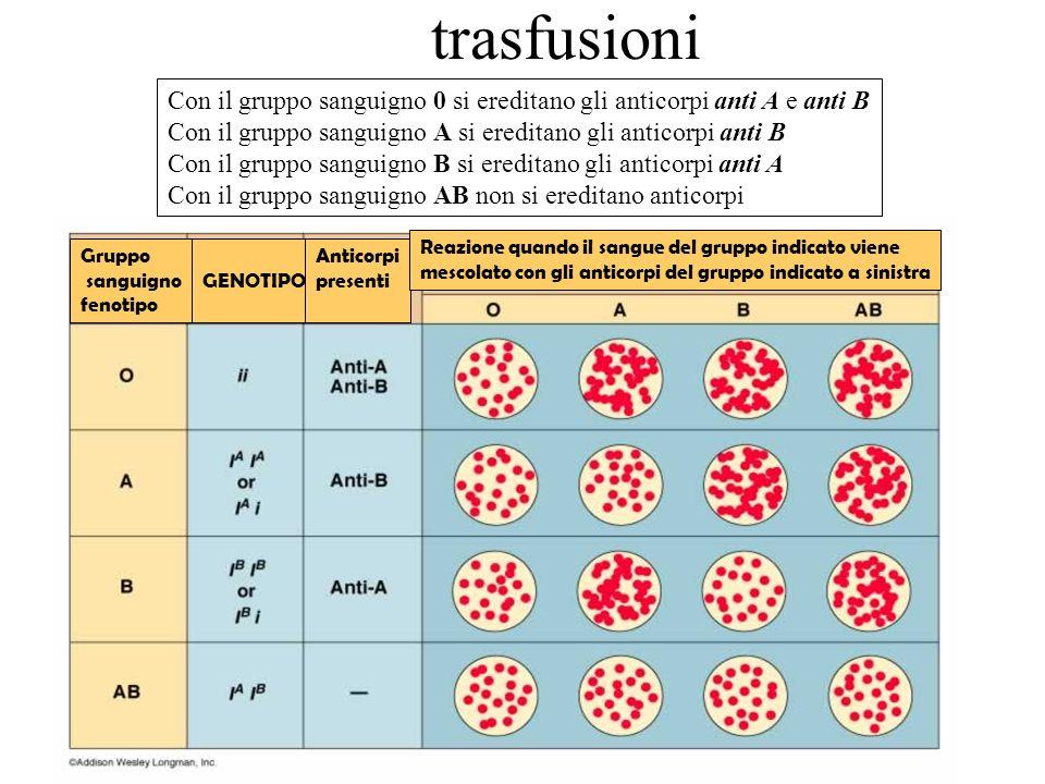Gruppo sanguigno fenotipo GENOTIPO Anticorpi presenti Reazione quando il sangue del gruppo indicato viene mescolato con gli anticorpi del gruppo indic