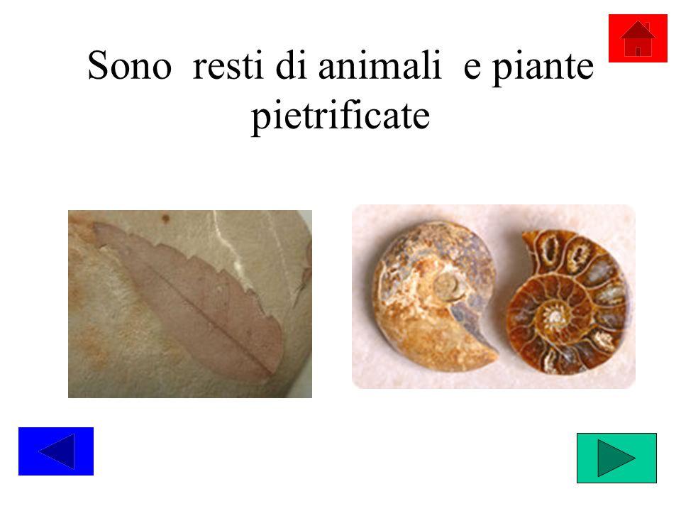 Sono resti di animali e piante pietrificate