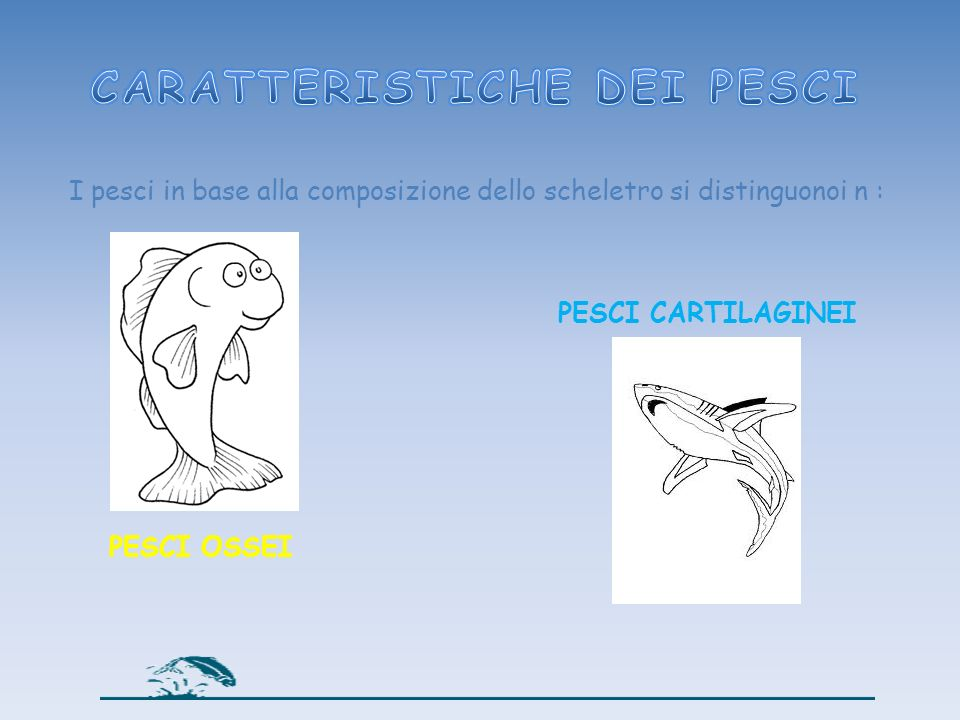 I pesci in base alla composizione dello scheletro si distinguonoi n : PESCI OSSEI PESCI CARTILAGINEI