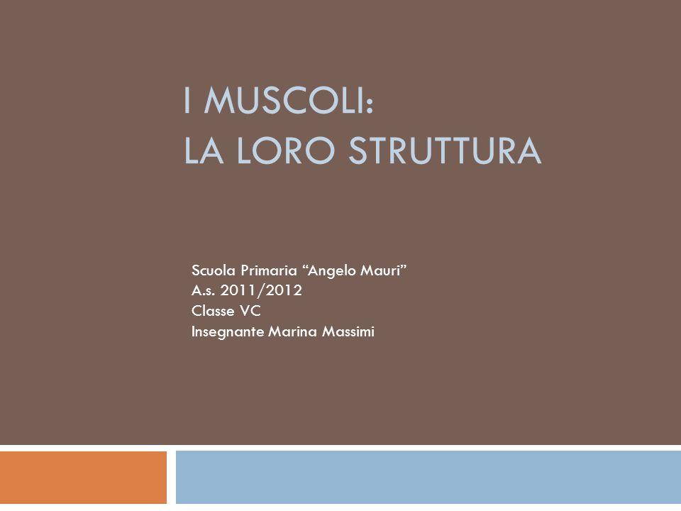 I MUSCOLI: LA LORO STRUTTURA Scuola Primaria Angelo Mauri A.s.