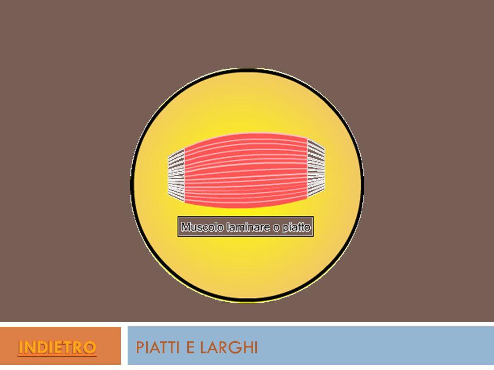 PIATTI E LARGHI